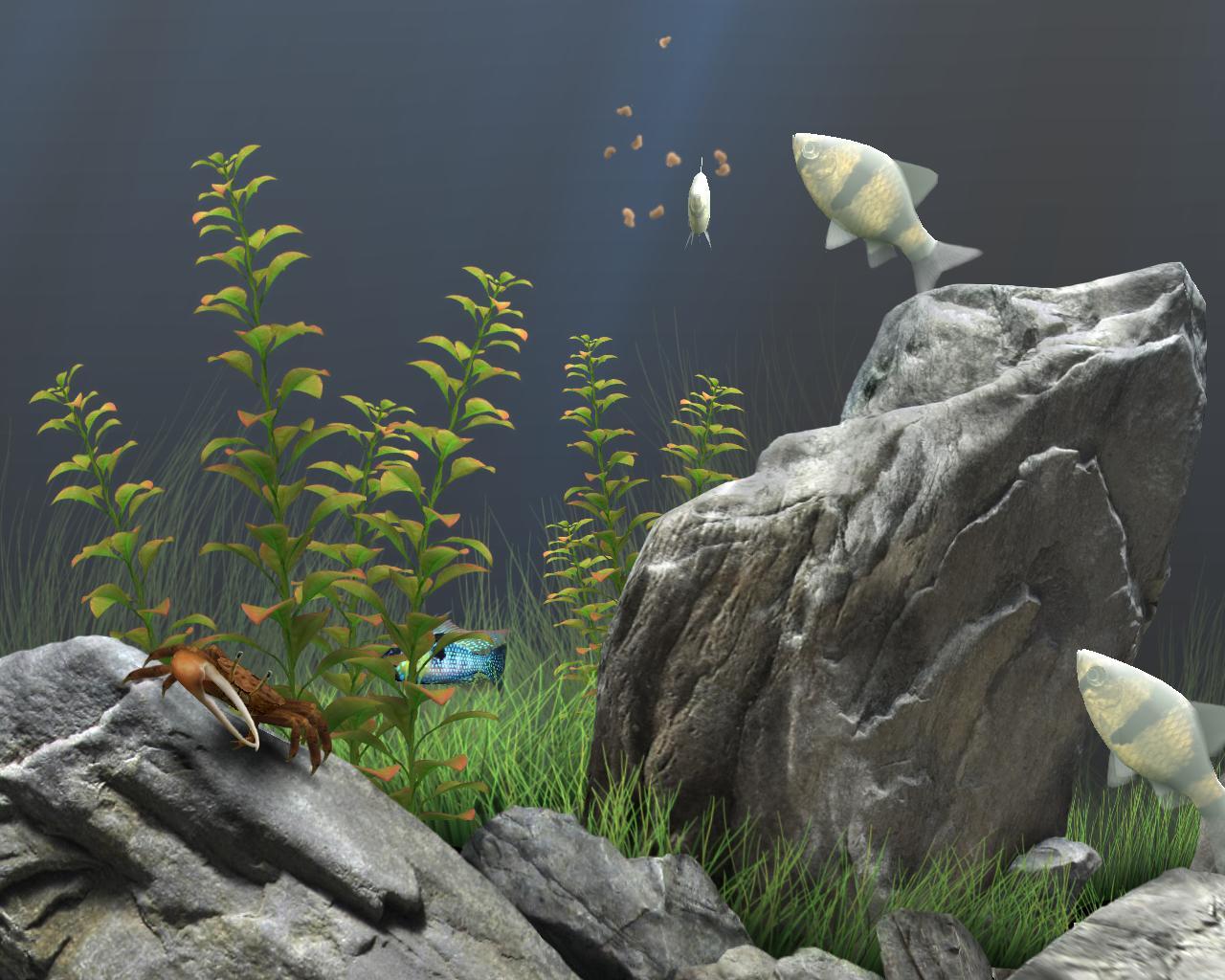 Dream aquarium screensaver very realistic screensavers